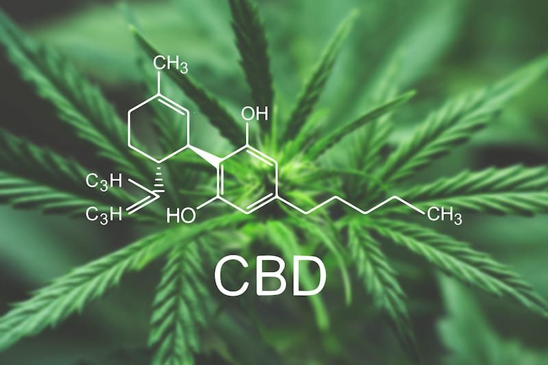 CBD  Rich Cannabis